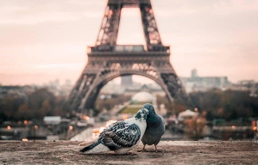 PARIS BIRDS